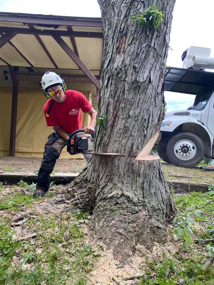 Experienced Professional Tree Removal Services
